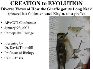 CREATION to EVOLUTION Diverse Views of How the Giraffe got its Long Neck pictured is a Golden-crowned Kinglet, not a gir