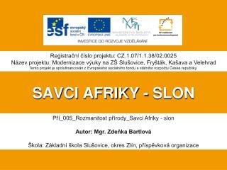 SAVCI AFRIKY - SLON