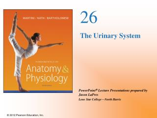 26 The Urinary System