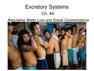 Excretory Systems Ch. 44