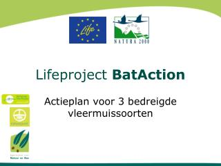 Lifeproject  BatAction