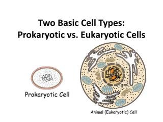 Two Basic Cell Types: Prokaryotic vs. Eukaryotic Cells