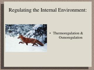 Regulating the Internal Environment:
