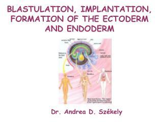 Dr. Andrea D. Székely