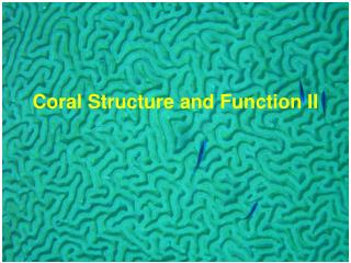 Coral Structure and Function II