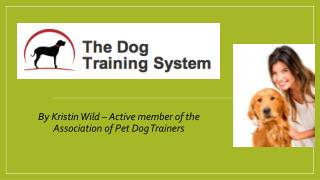The Dog Training System