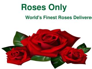Roses Only - World's Finest Roses Delivered