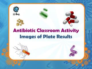 Antibiotic Classroom Activity   Images of Plate Results