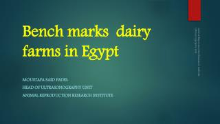 Bench marks  dairy farms in Egypt
