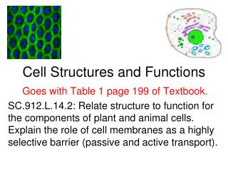 Cell Structures and Functions