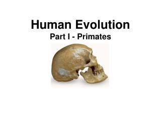 Human Evolution Part I - Primates