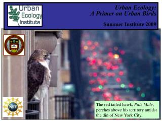 Urban Ecology:  A Primer on Urban Birds Summer Institute 2009