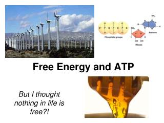 Free Energy and ATP