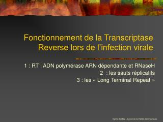 Fonctionnement de la Transcriptase Reverse lors de l�infection virale