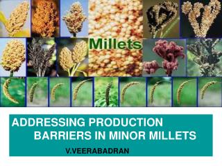 ADDRESSING PRODUCTION       	BARRIERS IN MINOR MILLETS V.VEERABADRAN