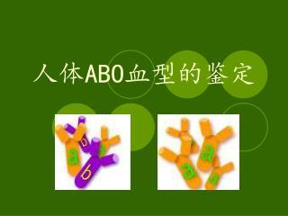 人体 ABO 血型的鉴定