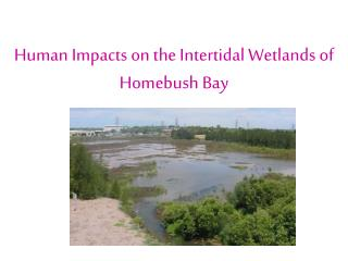Human Impacts on the Intertidal Wetlands of Homebush Bay