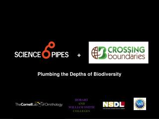 Plumbing the Depths of Biodiversity