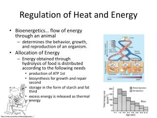 Regulation of Heat and Energy