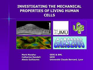 INVESTIGATING THE MECHANICAL PROPERTIES OF LIVING HUMAN CELLS