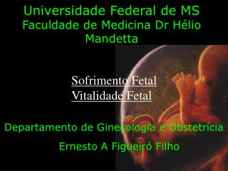 Universidade Federal de MS Faculdade de Medicina Dr Hélio Mandetta
