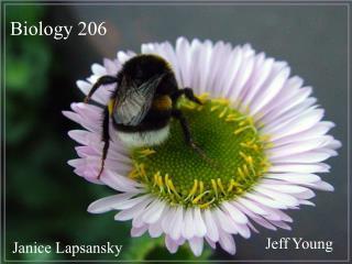 Biology 206