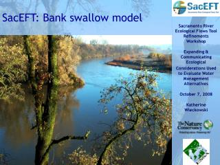 SacEFT: Bank swallow model