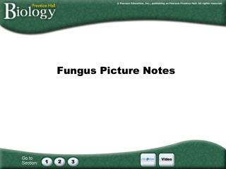 Fungus Picture Notes
