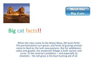 Big cat facts !!