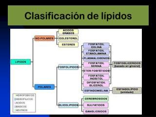 Biosíntesis de Triglicéridos