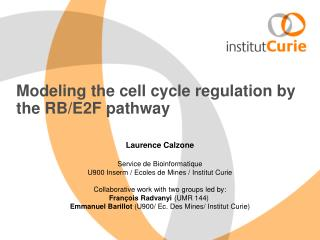 Modeling the cell cycle regulation by the RB/E2F pathway