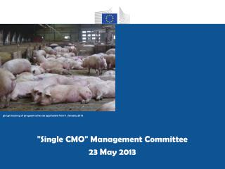 """ Single CMO ""  Management Committee 23 May 2013"