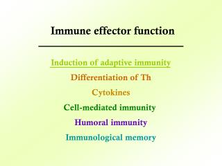 Induction of adaptive immunity Differentiation of Th Cytokines Cell-mediated immunity