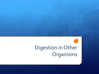 Digestion in Other Organisms