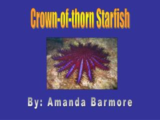 Crown-of-thorn Starfish