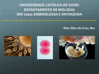 UNIVERSIDADE CATÓLICA DE GOIÁS DEPARTAMENTO DE BIOLOGIA BIO 2004:  EMBRIOLOGIA  E  ONTOGENIA