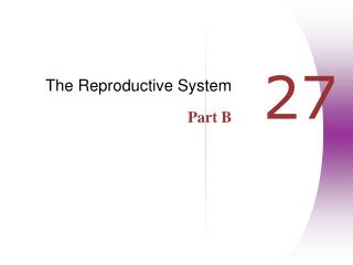 The Reproductive System Part B