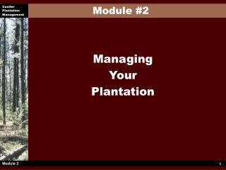 Managing Your Plantation