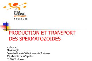 PRODUCTION ET TRANSPORT DES SPERMATOZOIDES
