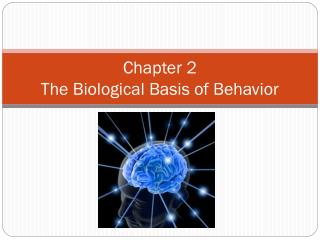Chapter 2 The Biological Basis of Behavior