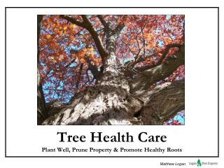 Tree Health Care Plant Well, Prune Property & Promote Healthy Roots