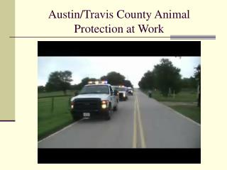 Austin/Travis County Animal Protection at Work