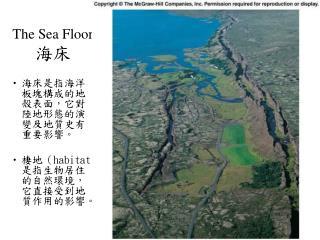 The Sea Floor 海床