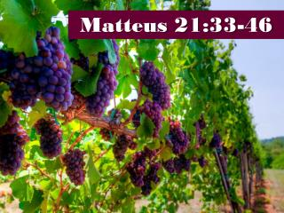 Matteus 21:33-46