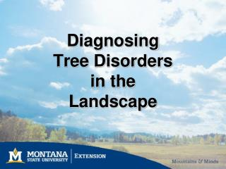 Diagnosing  Tree Disorders  in the  Landscape
