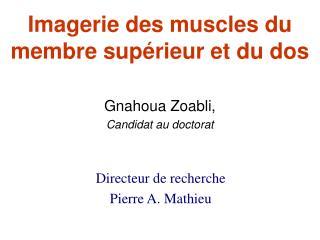 Imagerie des muscles du membre supérieur et du dos