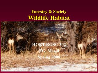 Forestry & Society Wildlife Habitat