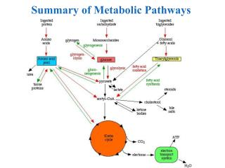 Summary of Metabolic Pathways