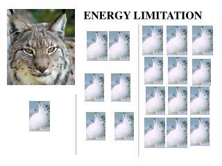 ENERGY LIMITATION