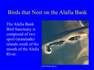 Birds that Nest on the Alafia Bank